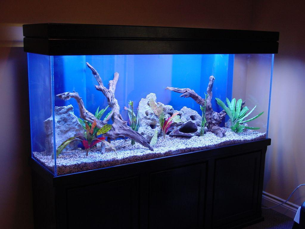 Image of: Best Fish Tank Decorations