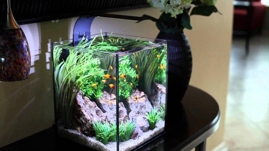 Image of: Decoration Cool Fish Tank  Ideas