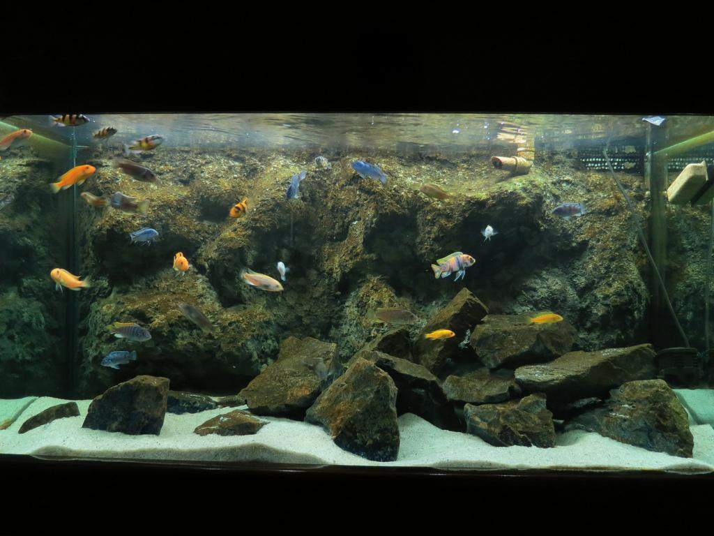 Image of: Decorations Cool Fish Tanks