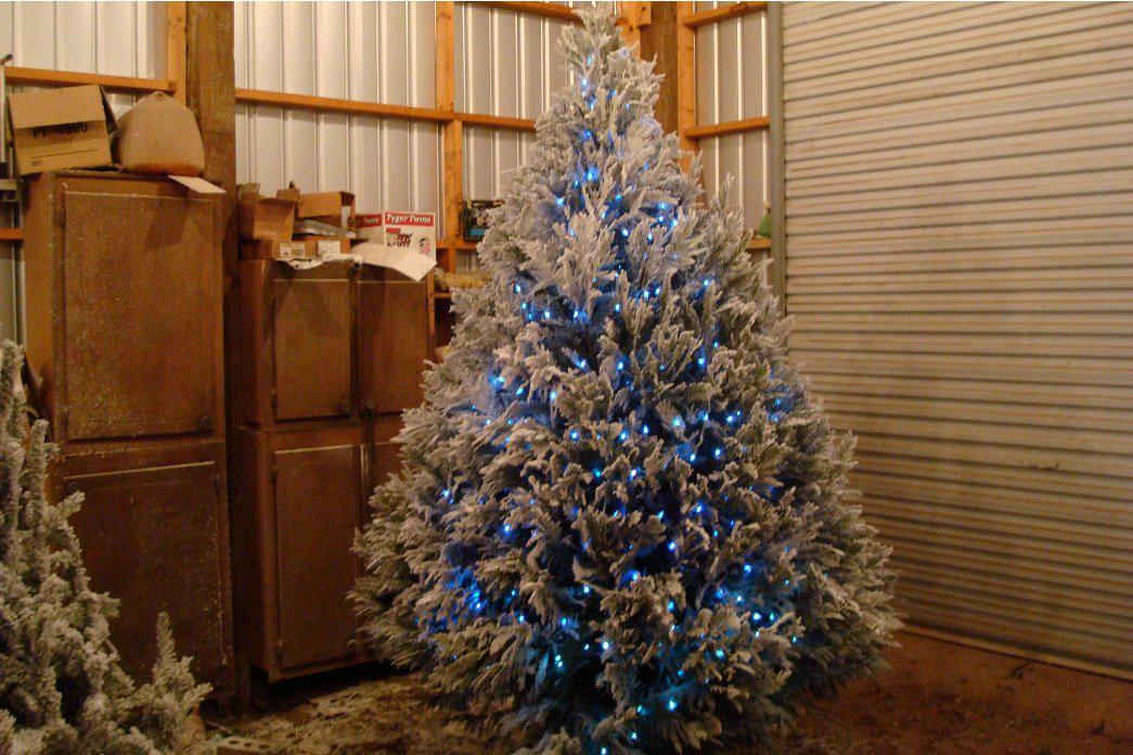 Image of: Pictures Of Decorated Christmas Trees