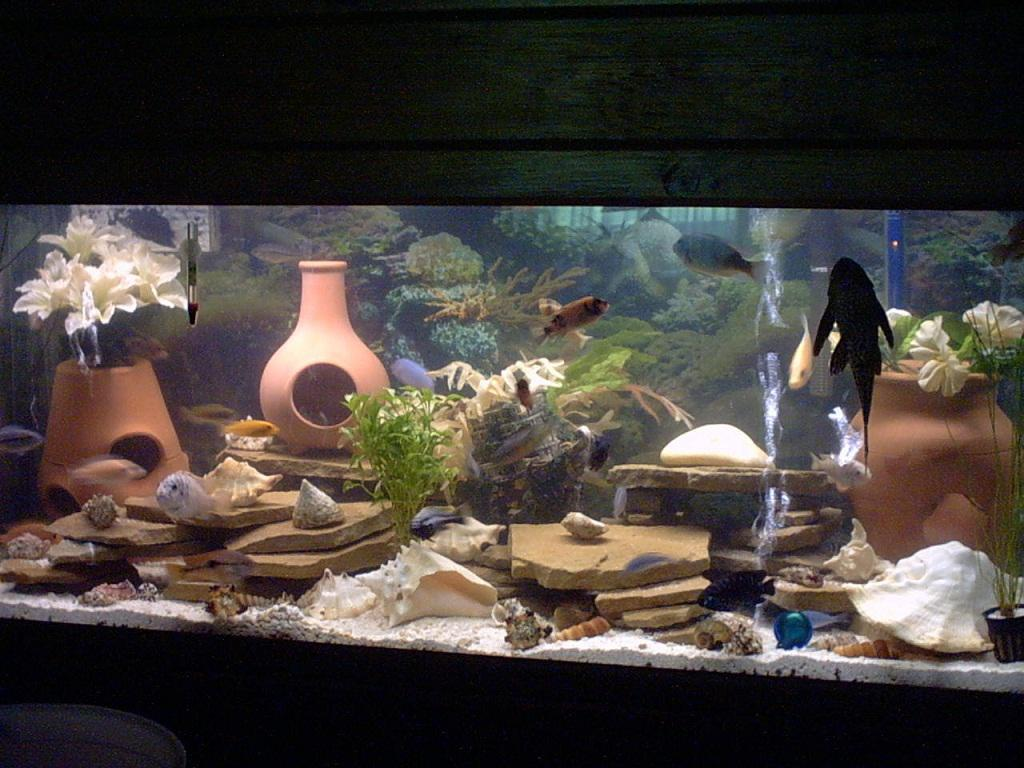 Image of: Small Fish Tank Decorations