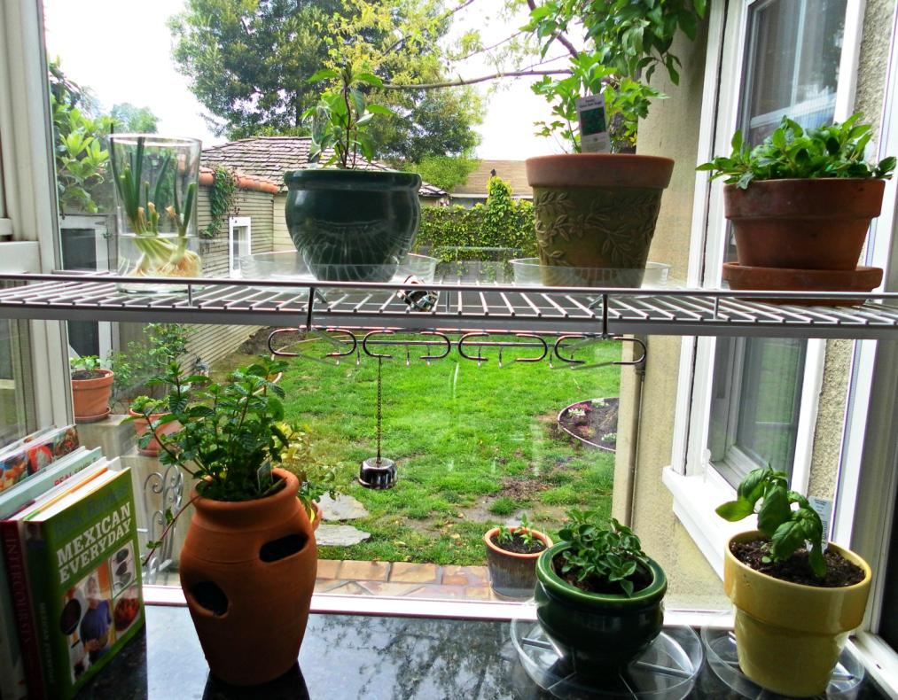Image of: Awesome Indoor Herb Garden