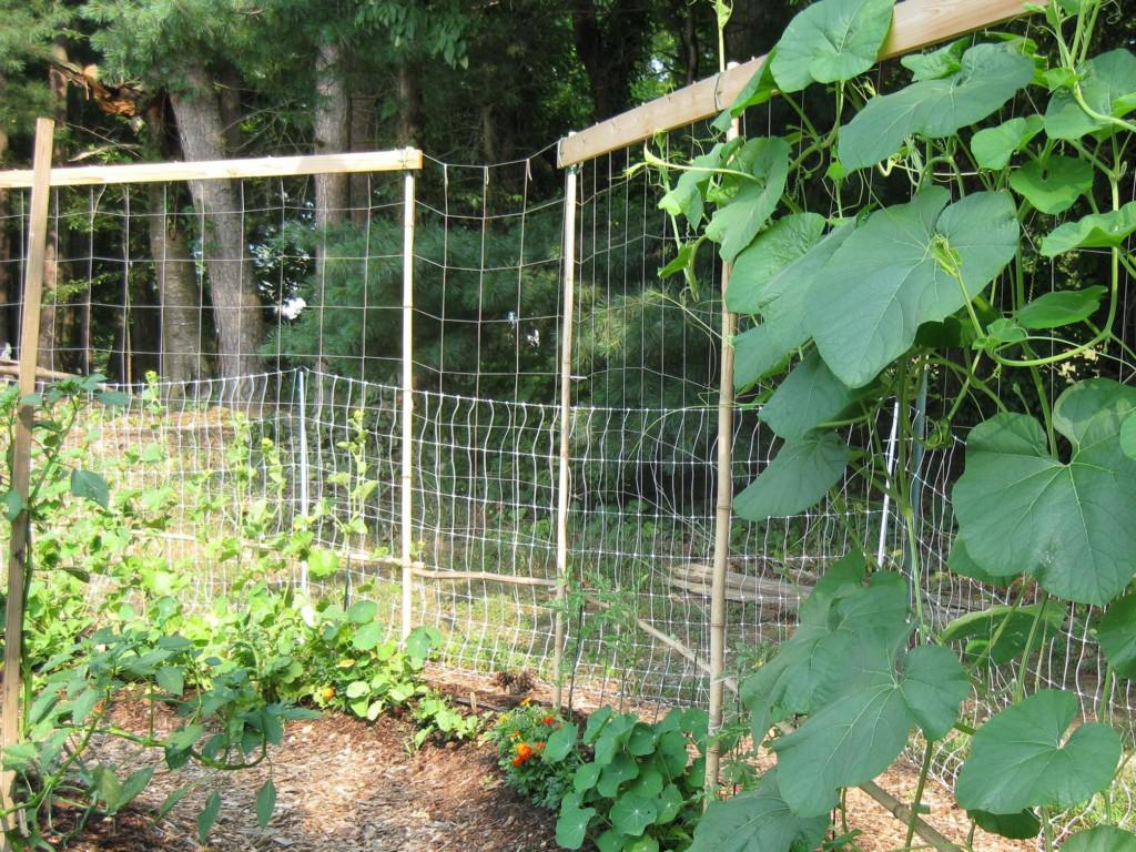 Image of: Building A Cucumber Trellis