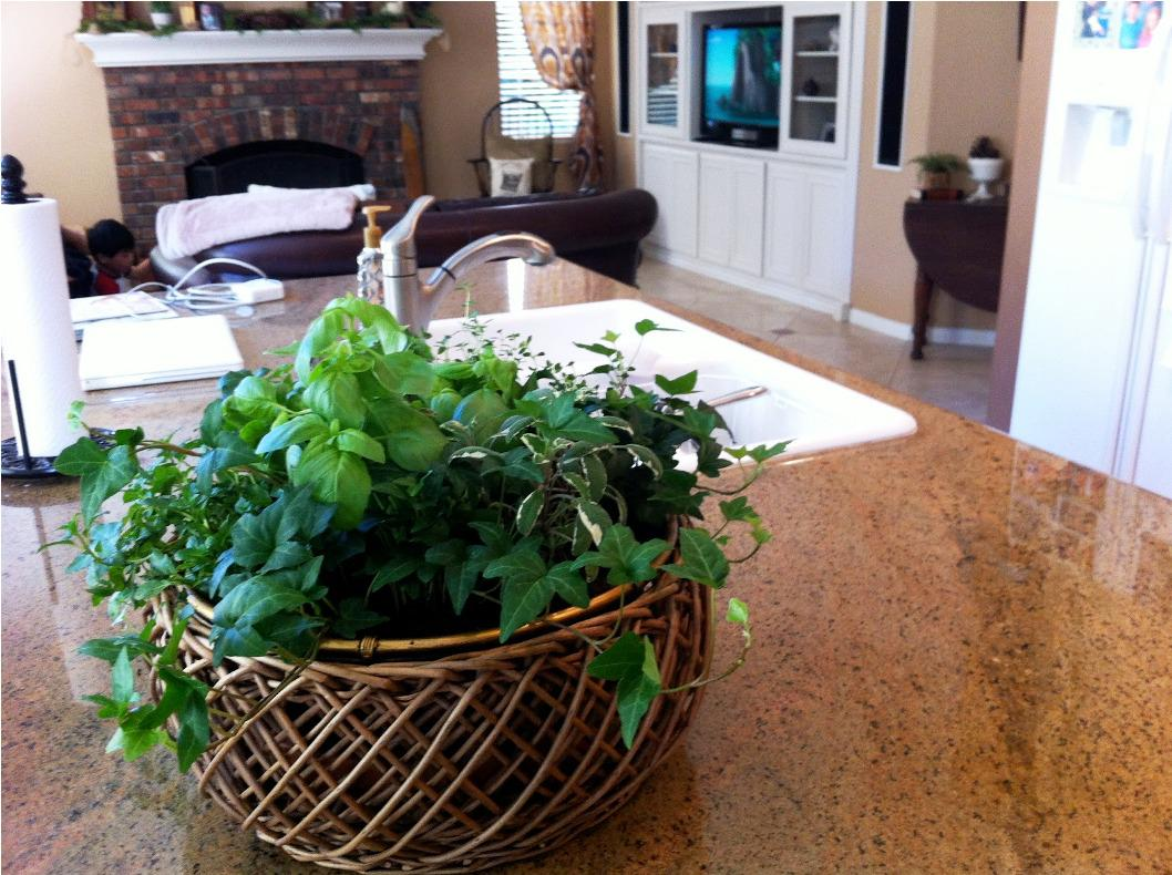 Image of: Buy Indoor Herb Garden