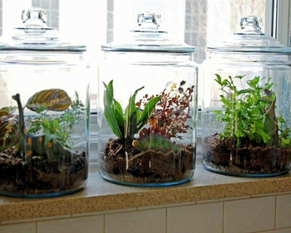 Image of: How to Grow an Indoor Herb Garden Ideas