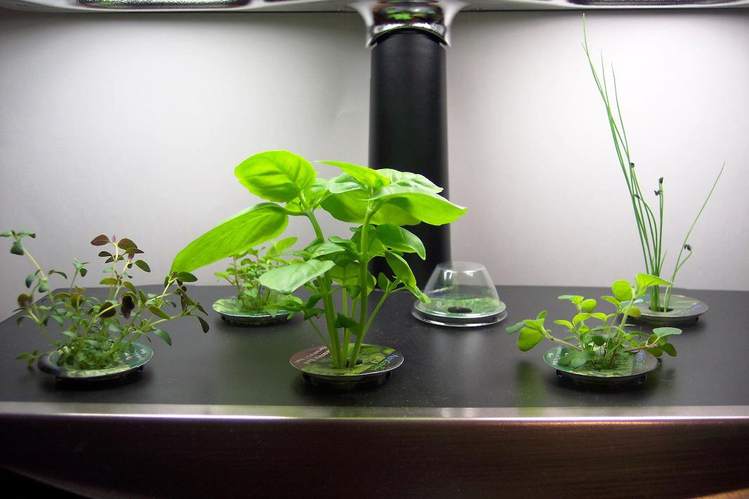 Image of: How to Grow an Indoor Herb Garden