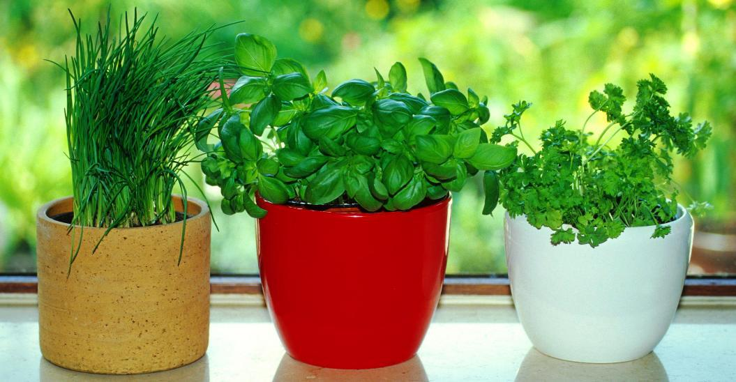 Image of: How to Make an Indoor Herb Garden