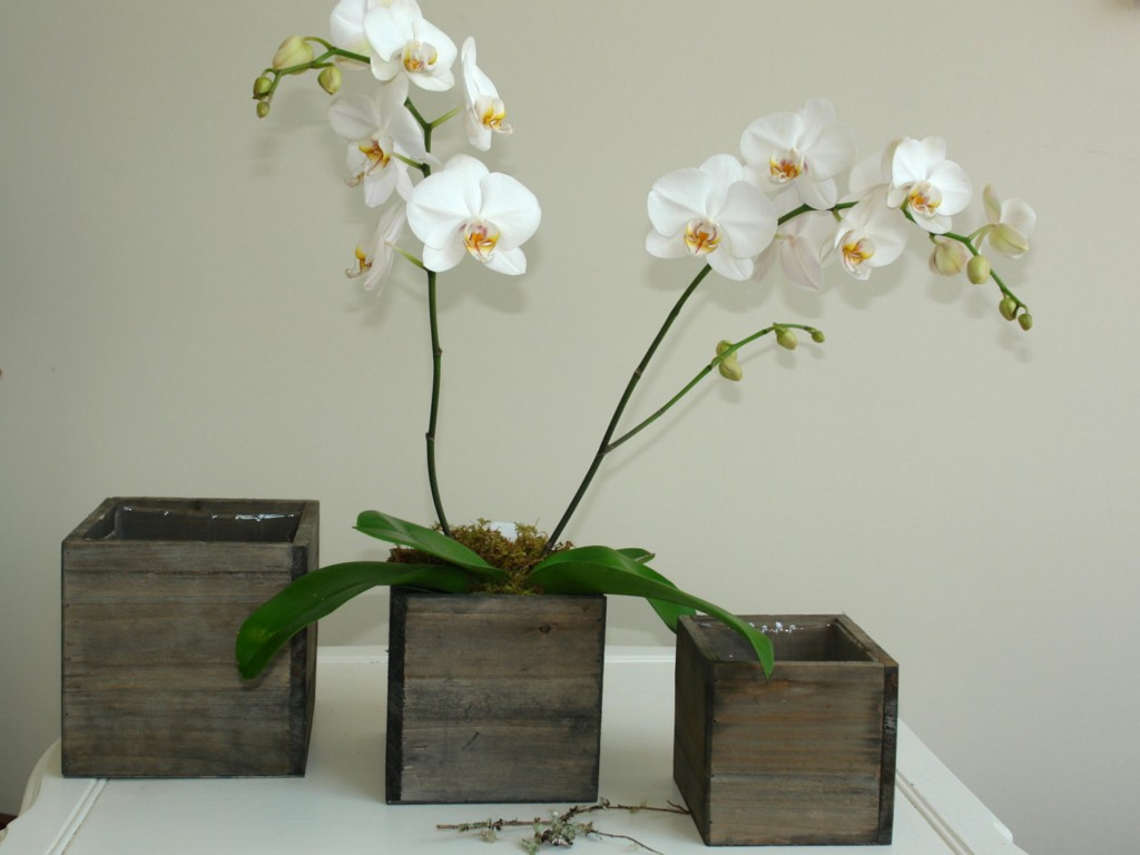 Image of: Rustic Wooden Flower Boxes