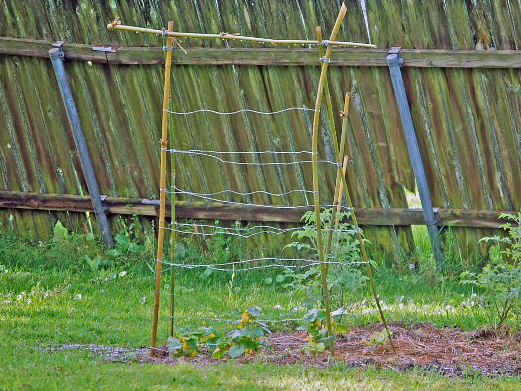 Image of: Simple Cucumber Trellis