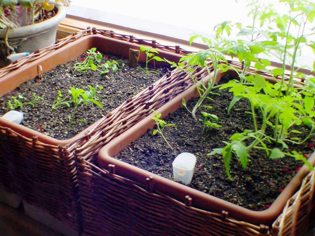 Image of: Window Sill Herb Garden Ideas