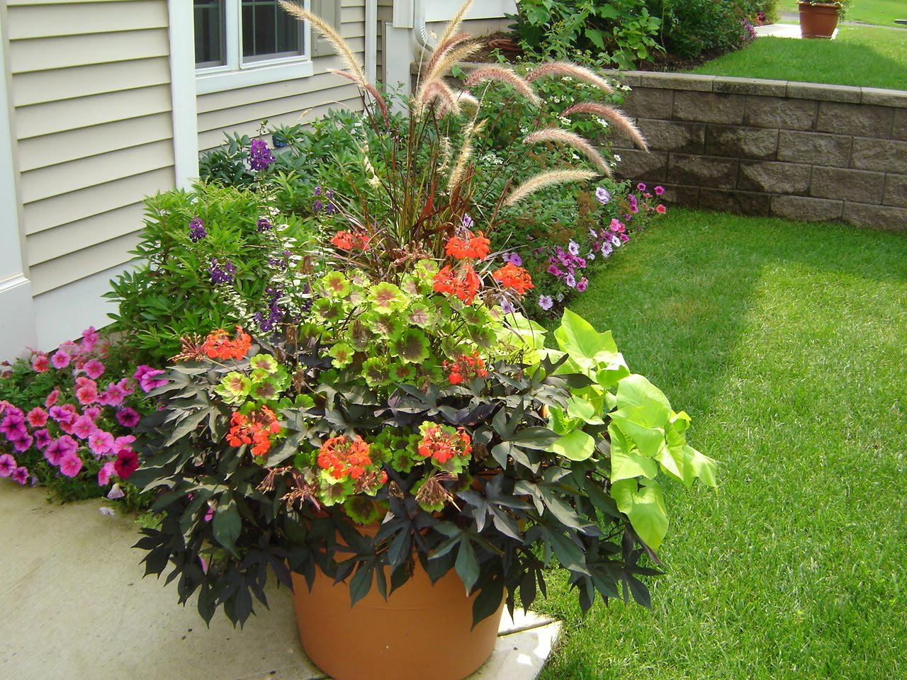 Image of: Container Garden Ideas