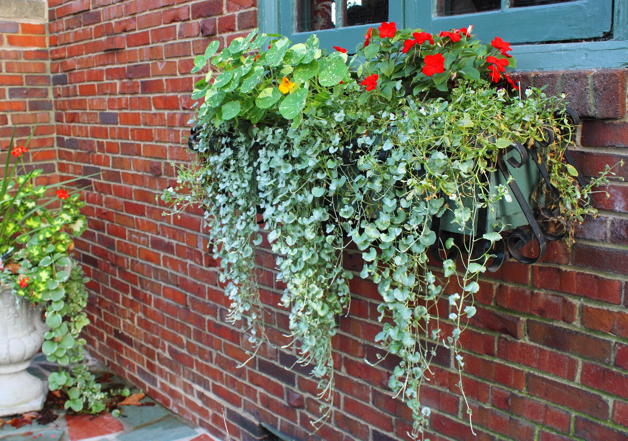 Image of: Garden Window Boxes