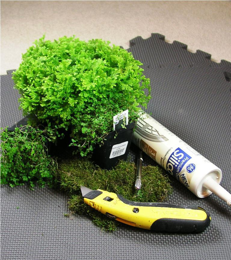 Image of: How To Make A Living Moss Bath Mat