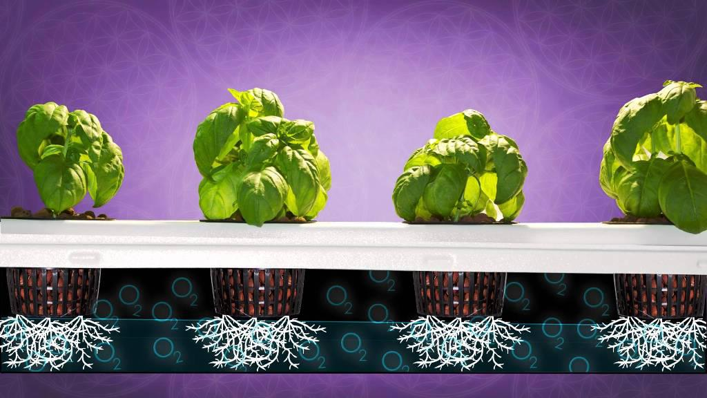 Image of: Best Hydroponic Grow Box