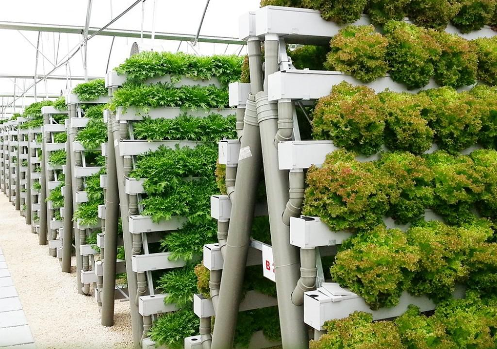 Image of: DIY Hydroponics Plans