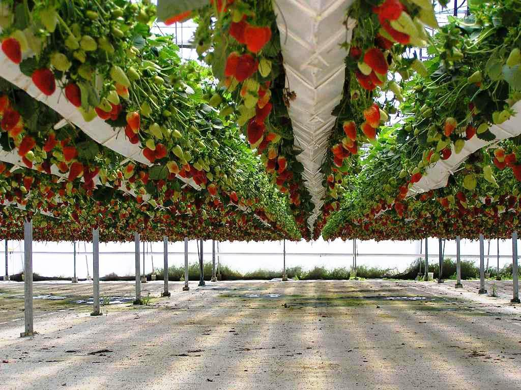Image of: Hydroponic Gardening Supplies