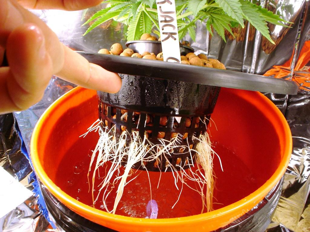 Image of: Hydroponic Grow Box DIY