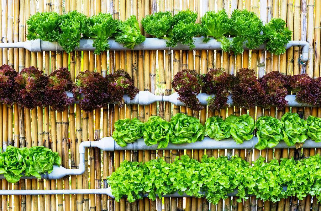 Image of: Hydroponic Wall Garden