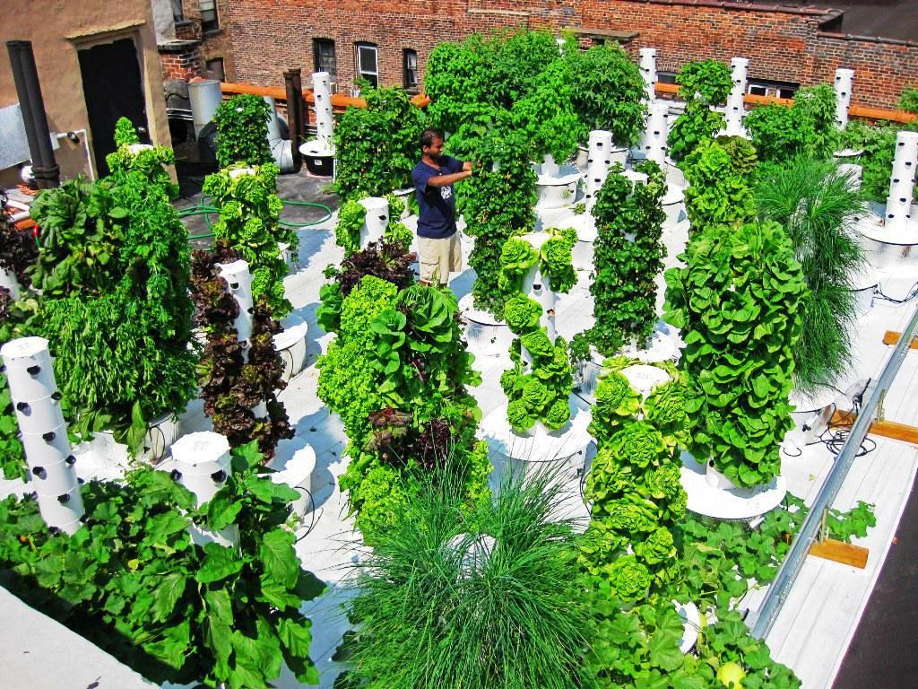 Image of: Vertical Hydroponic Garden